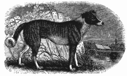 from A Natural History of British and Foreign Quadrupeds by James Hamilton Fennell, 1841