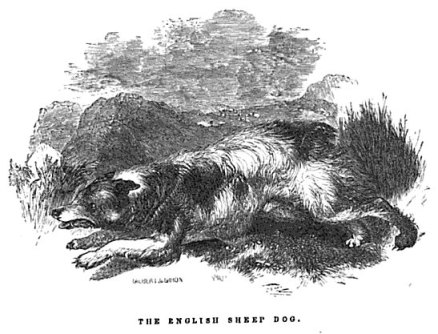 The English Sheep Dog, 1846