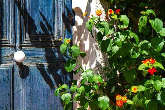 blue door, red flowers