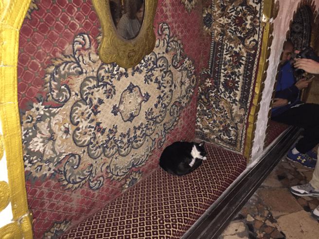 ниша и кот