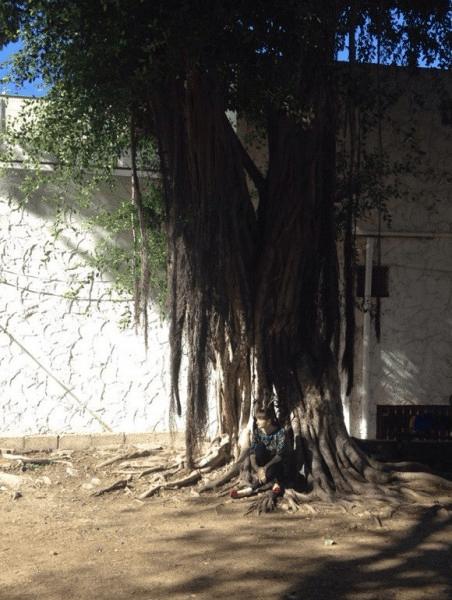anna-vul-under-tree