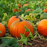 See It for Yourself: The Eye Catching Health Benefits of Squash