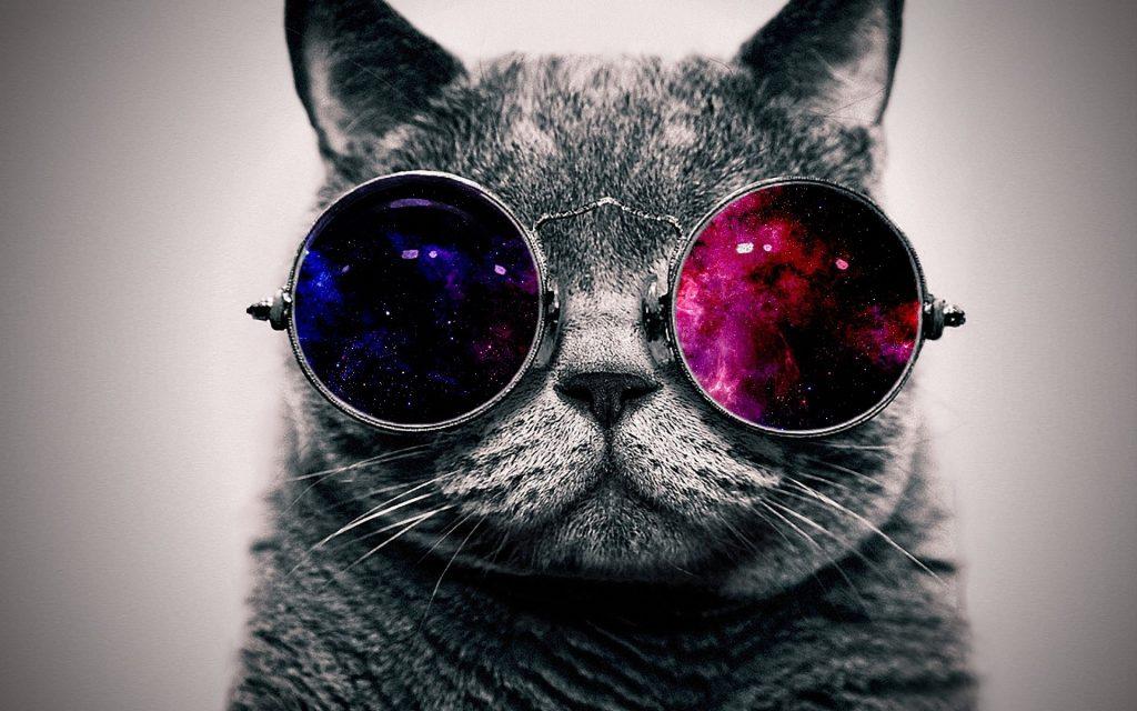 Gato_Buscando_Empleo