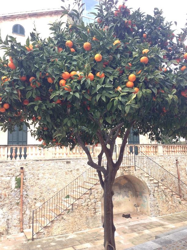 Orangenbäume Artà Mallorca