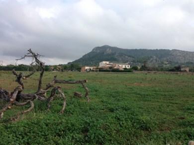 Blick aus der Ferne auf Finca Can Paulino