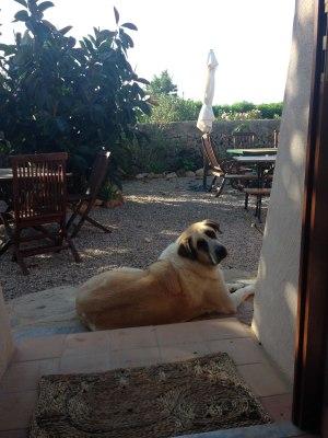 Hund auf Terrasse – Finca Can Paulino