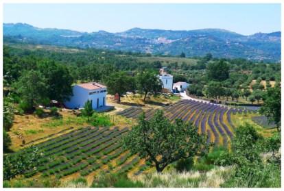 Quinta das Lavandas Lavendelfelder