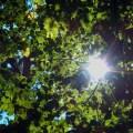 Bäume im Sonnenschein nachhaltig Urlaub machen