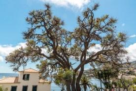 Baum und Meerblick Madeira