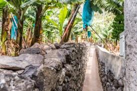 Steinmauer Bananenplantage Madeira
