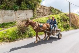 Pferdewagen Azoren Sao Miguel