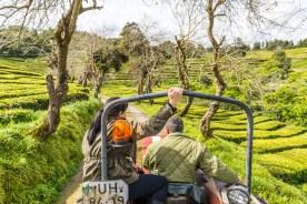 Traktor fährt durch Teeplantage Azoren Sao Miguel
