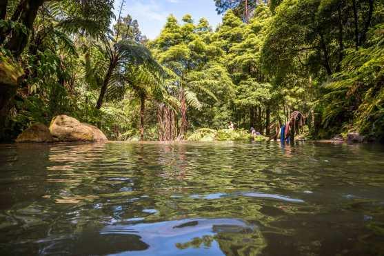 Caldeira Velha im Wald auf Sao Miguel