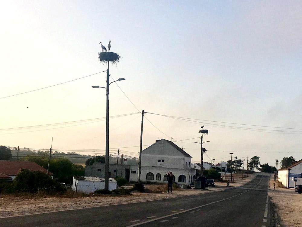 Störche in Comporta in Portugal
