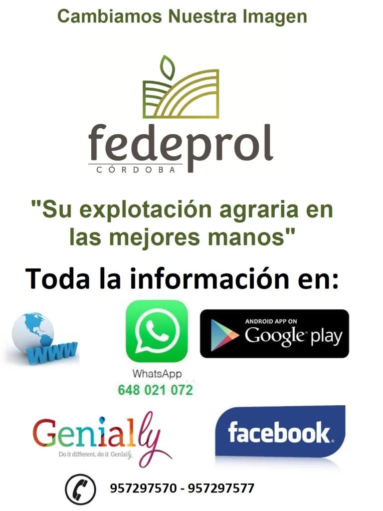 Fedeprol Cordoba Aceite Ecologico Olivar de Sierra Olivarera Los Pedroches Olipe Olivalle
