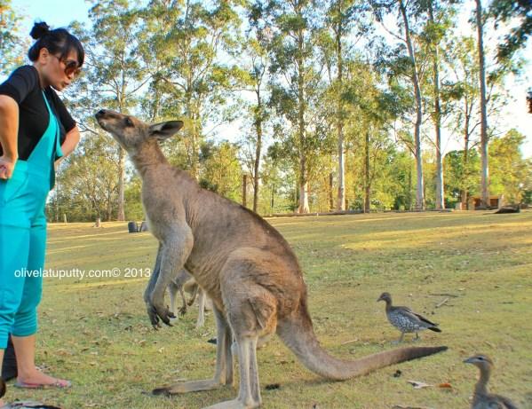 berkunjung ke surga koala dan kangguru