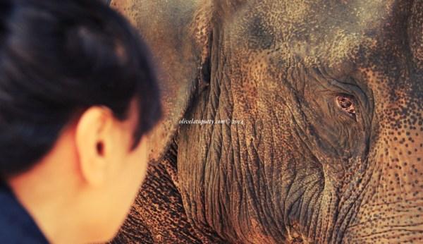 wisata gajah di chiang mai