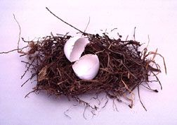 Hatched egg, symbol of new life