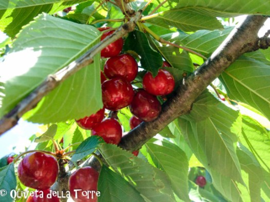 Ciliegie, Kirschen, cerises, cherries