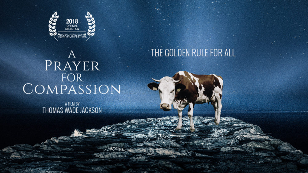 A Prayer for Compassion - A Review - Olive the Thyme Kitchen