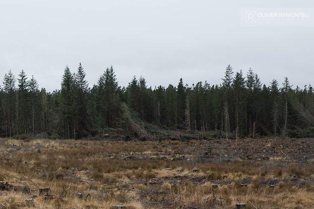 foret highlands ecosse