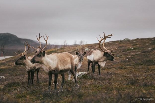 norvege suede voyage photographie roadtrip 2016 10 08407