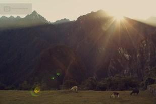 photo-voyage-perou-machu-picchu-2012-07-157-900px