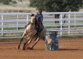 2018 EquiFest Saddle Series