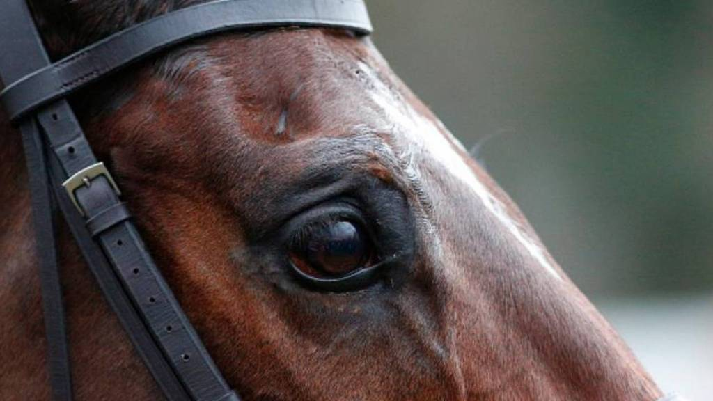Αφηνιασμένο άλογο στους δρόμους της Κατερίνης