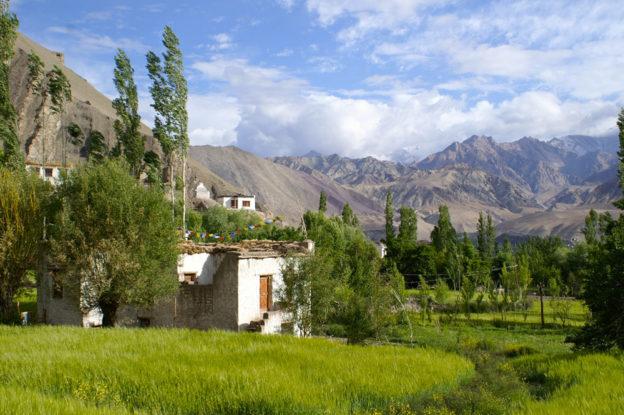 Ladakh-Alchi