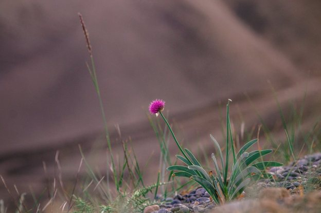 herb-medicine-journey-trekking-condition-omalaya-ladakh-kargil-sapi-la-5