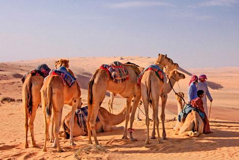 Afbeeldingsresultaat voor kameel safari oman