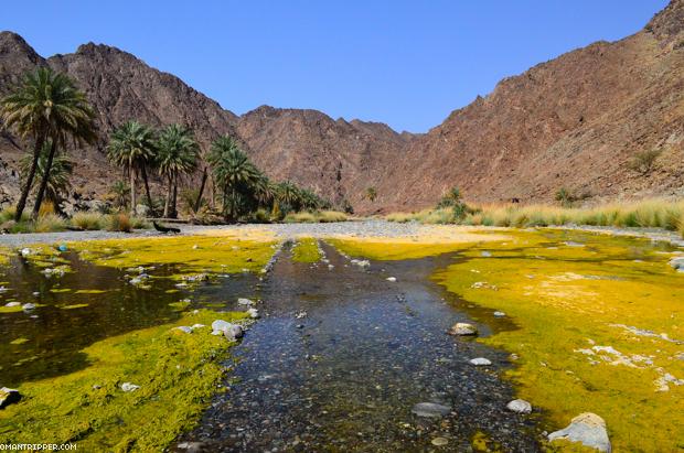 Wadi Al Abyad (2)