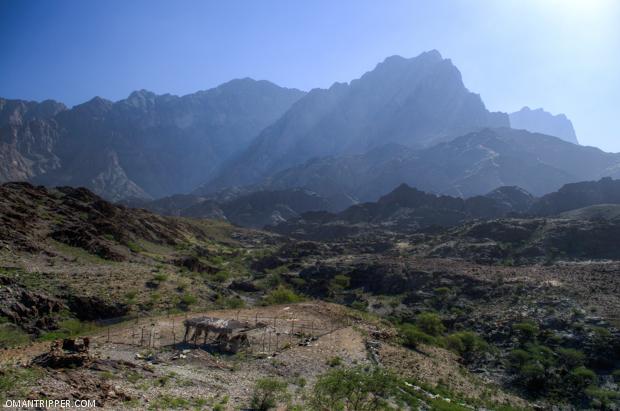 Wadi Bani Awuf (3)