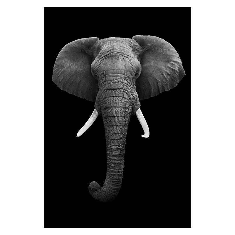 affiche murale animaux noir et blanc moderne abstraite éléphant