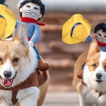 Funny Cowboy Themed Halloween Dog Costume
