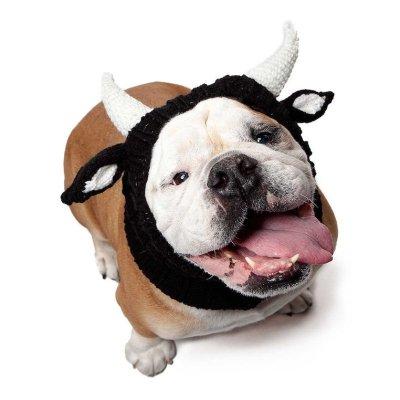 Bull Horns Pet Costume