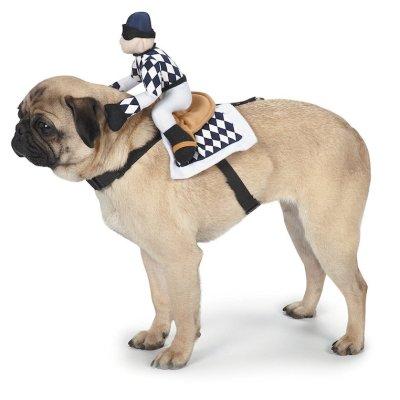 Jockey Saddle Dog Costume