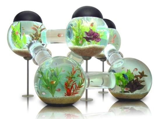 Labyrinth Aquarium | Unique Fish Tank Design