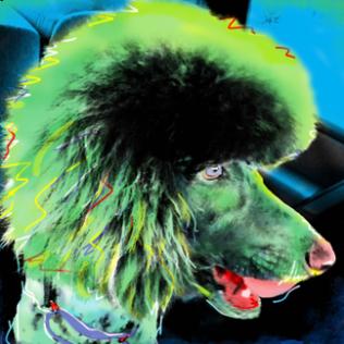 Poodle Pop Art Portrait