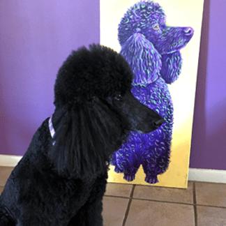 Poodle - Acrylic Portrait