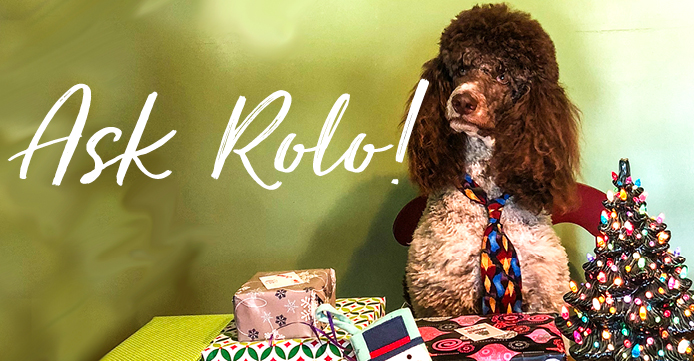 Poodle with Christmas Presents