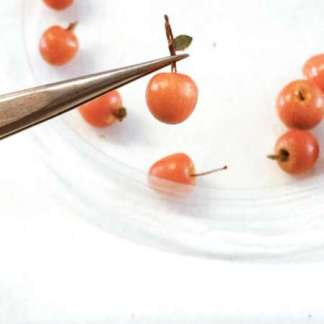 Rode Appels