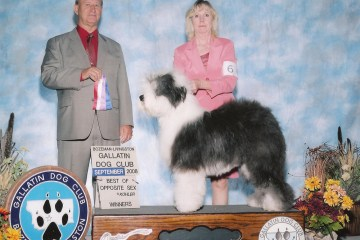 Sheepdog breed
