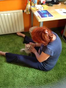 Behandlung eines Hundes