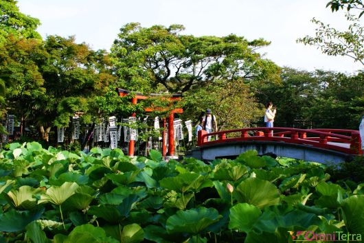 Japon - Kamakura - Sanctuaire Tsurugaoka Hachiman-gu - Nénuphars et pont