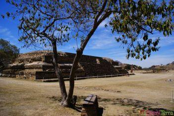 Mexique - Monte Alban - Sous l'arbre