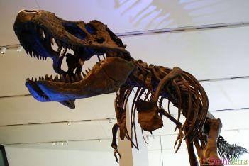Toronto - ROM - Dinosaure