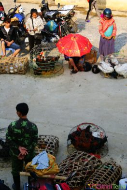Vietnam - Bac Ha - Marché aux volailles