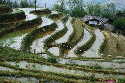 Vietnam - Sapa - Rizière